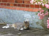 Resting in my Rose Garden. (Efter en lyckad jakt.)
